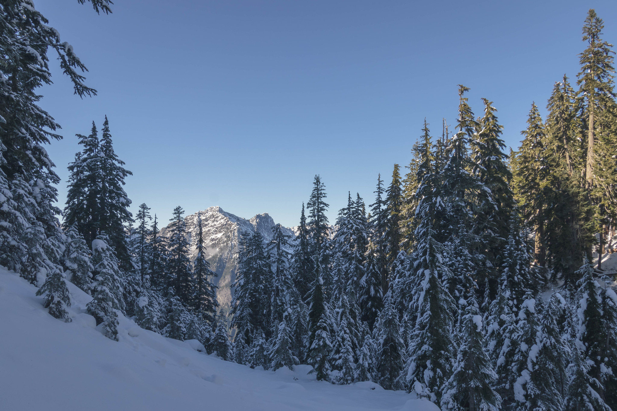 Hubbart Peak through forest
