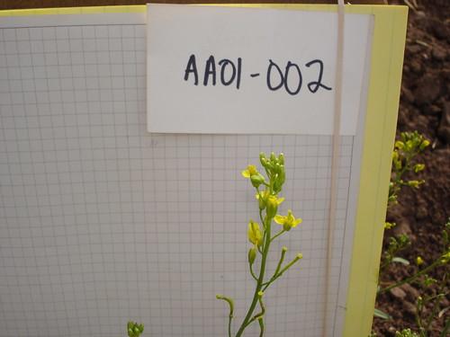 AA01-002 CF05 FL2
