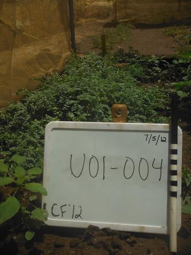 U01-004 CF12 PL4