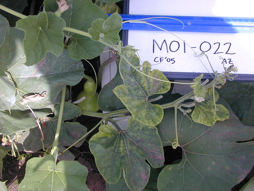 M01-022 CF05 P2