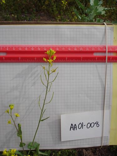 AA01-008 CF05 FL2