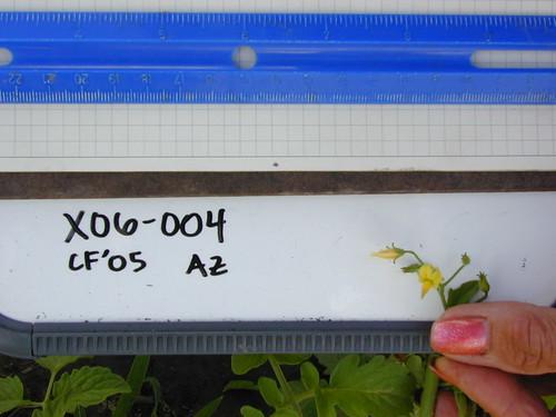 X06-004 CF05 Fl