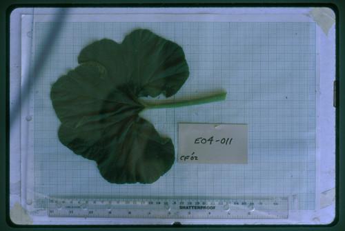 E04-011 CF02 L