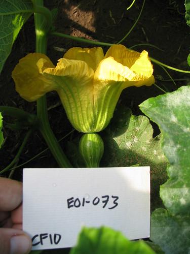 E01-073 CF10 Fl2