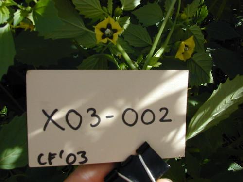 X03-002 CF03 Fl1