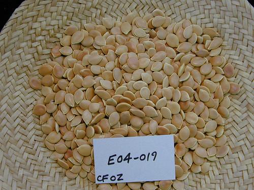 E04-019 CF02 S