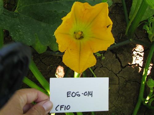 E06-014 CF10 Fl2