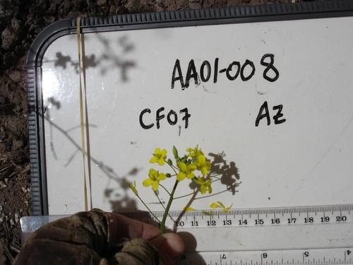 AA01-008 CF07 Fl2