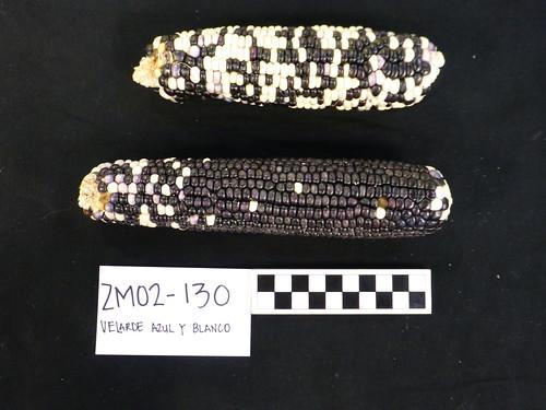 ZM02-130 Voucher1
