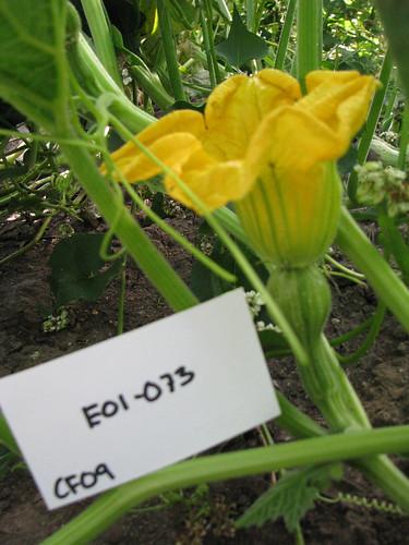 E01-073 CF09 Fl3