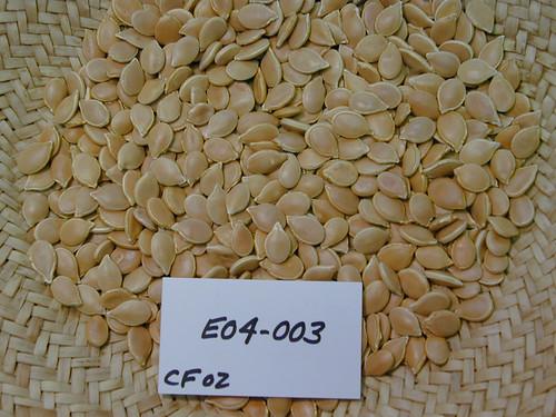E04-003 CF02 S