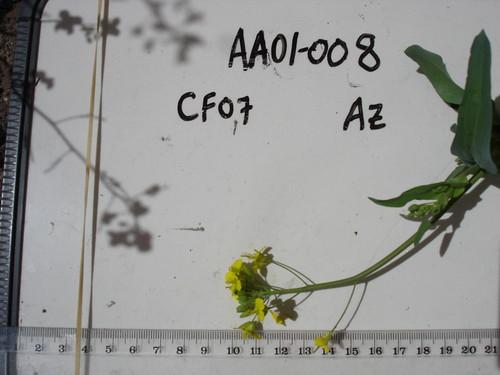 AA01-008 CF07 Fl1