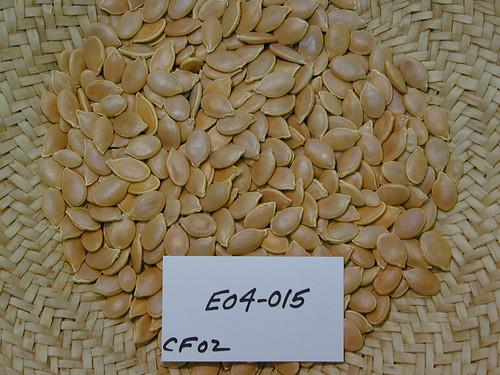 E04-015 CF02 S