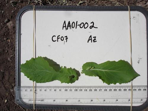 AA01-002 CF07 L