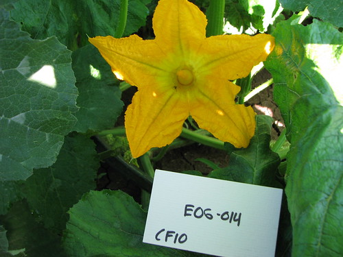 E06-014 CF10 Fl3