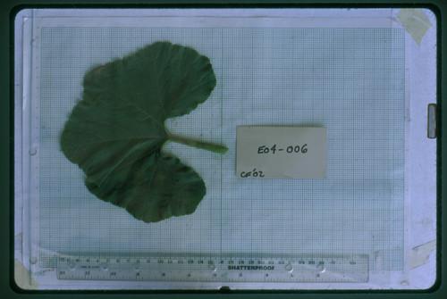 E04-006 CF02 L