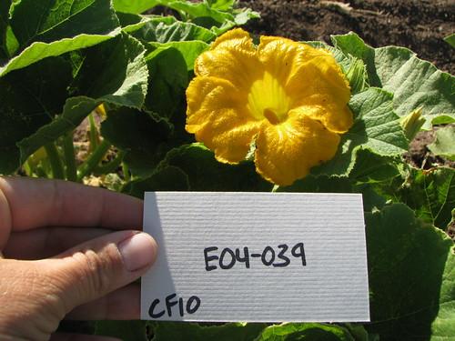 E04-039 CF10 Fl1