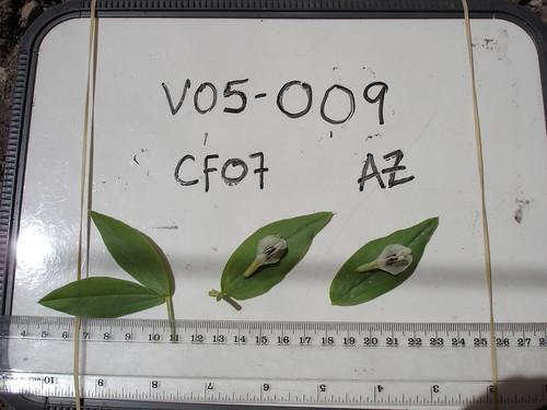 V05-009 CF07 Fl, L