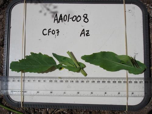 AA01-008 CF07 L1