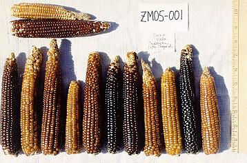 ZM05-001 Fr