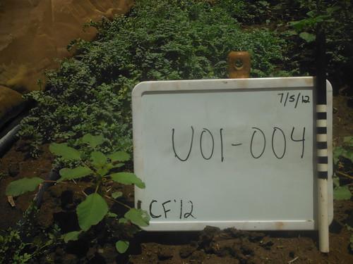 U01-004 CF12 PL2