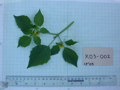 X03-002 CF03 L2