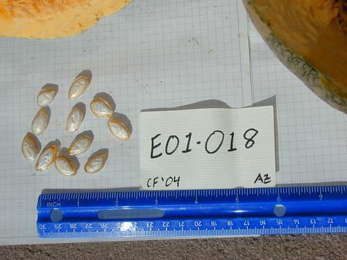 E01-018 CF04 S1