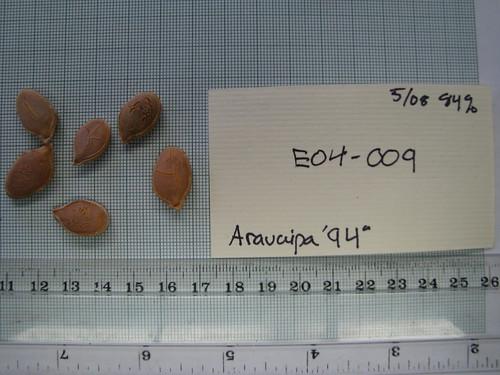 E04-009 Aravaipa '94 S