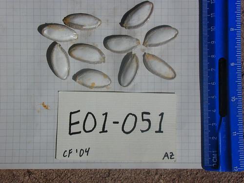 E01-051 CF04 S1