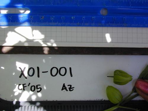 X01-001 CF05 Fr1