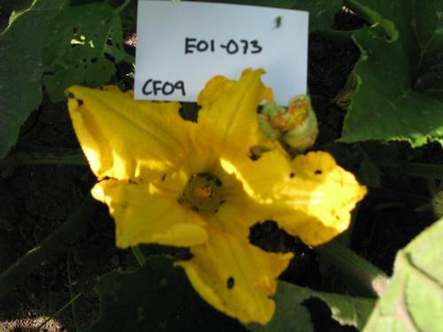 E01-073 CF09 Fl1