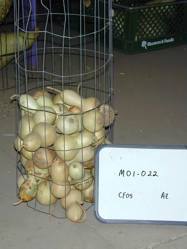 M01-022 CF05 Fr5