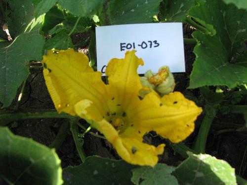 E01-073 CF09 Fl2