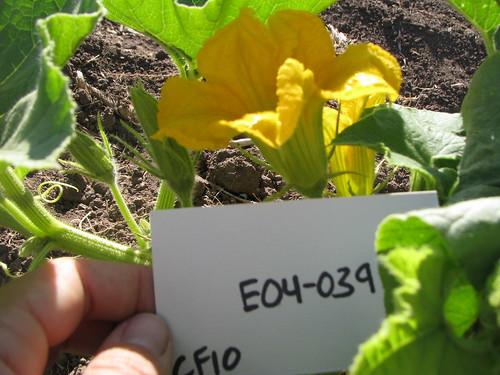 E04-039 CF10 Fl2