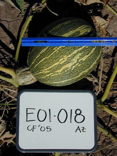 E01-018 CF05 Fr2