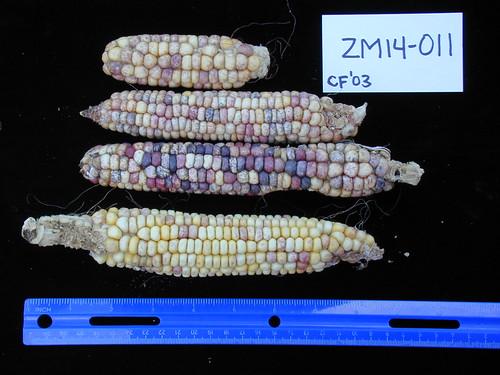 ZM14-011 CF03 Fr1
