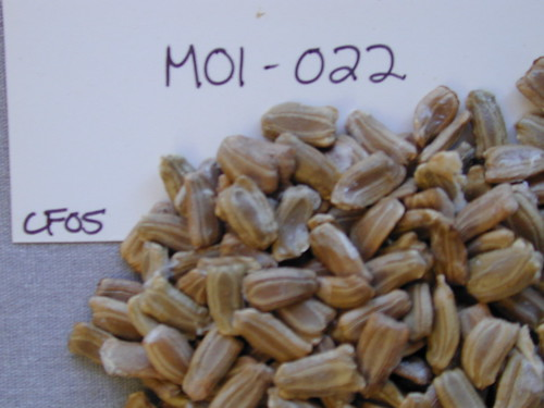 M01-022 CF05 S1