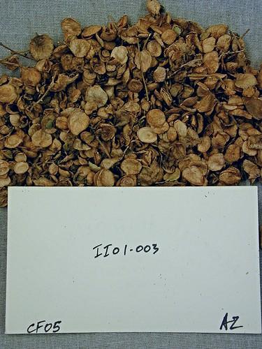 II01-003 CF05 S1