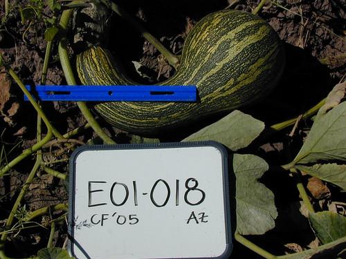 E01-018 CF05 Fr1
