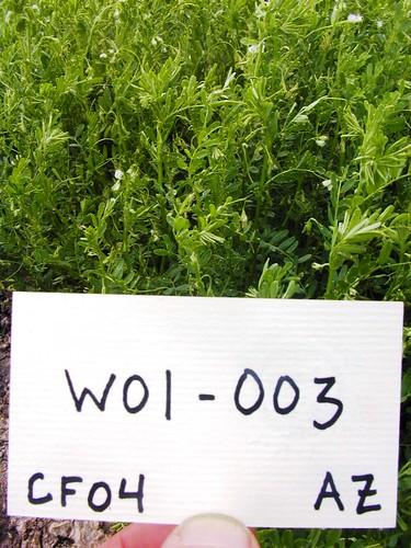 W01-003 CF04 P2