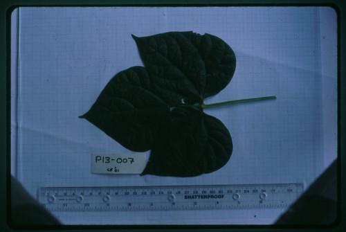 P13-007 CF01 L2
