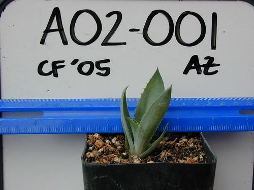 A02-001 CF05 P