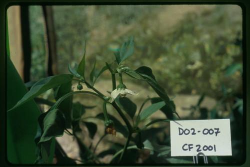 D02-007 CF01 Fl1