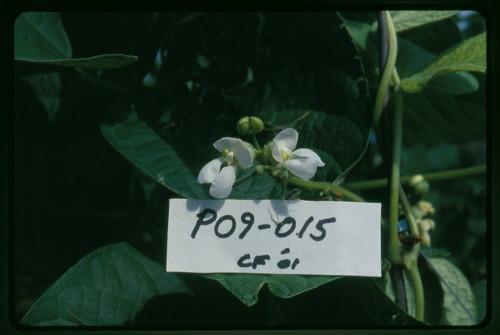 P09-015 CF01 Fl