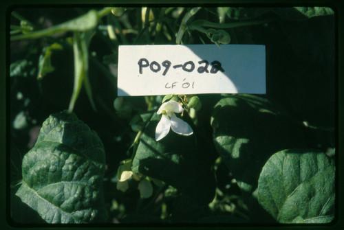 P09-022A CF01 Fl