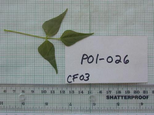 P01-026 CF03 L