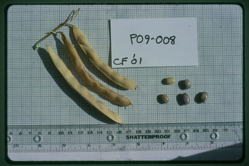P09-008 CF01 Fr, S