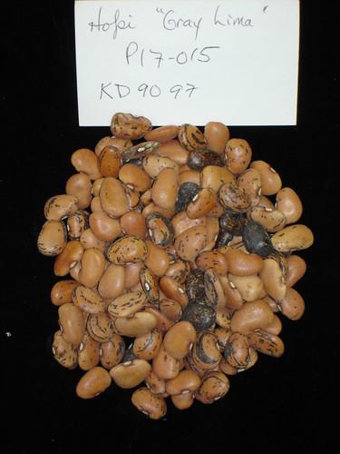 P17-015 KD9097  S