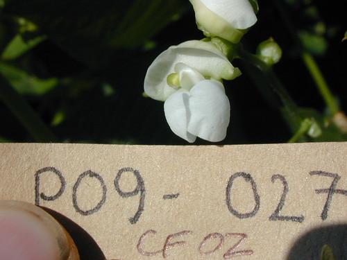 P09-027 CF02 Fl2