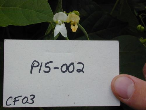 P15-002 CF03 Fl1